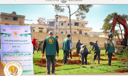 Afforestation campaign in Idlib governorate
