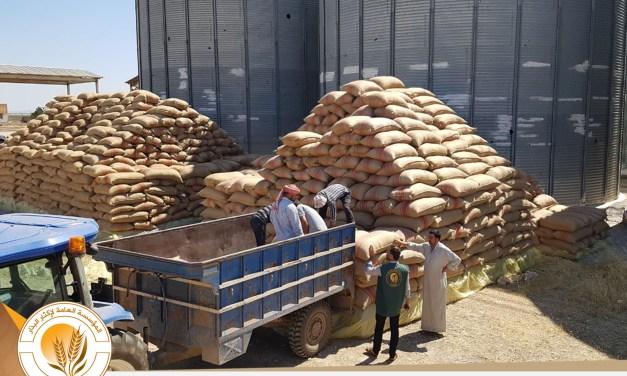 استلام بذار القمح من المزارعين المتعاقدين ضمن مشروع القمح 2017