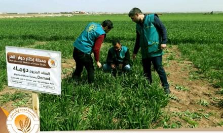 مشروع الحفاظ على أصناف القمح السورية واستعادة نقاوتها الصنفية بالتعاون مع الهيئة العامة للبحوث الزراعية السورية