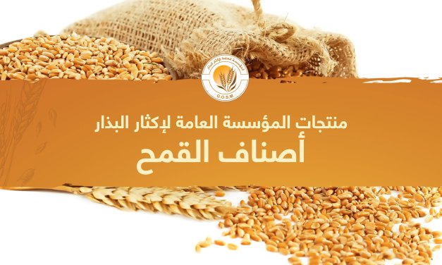 منتجات المؤسسة العامة لإكثار البذار أصناف القمح