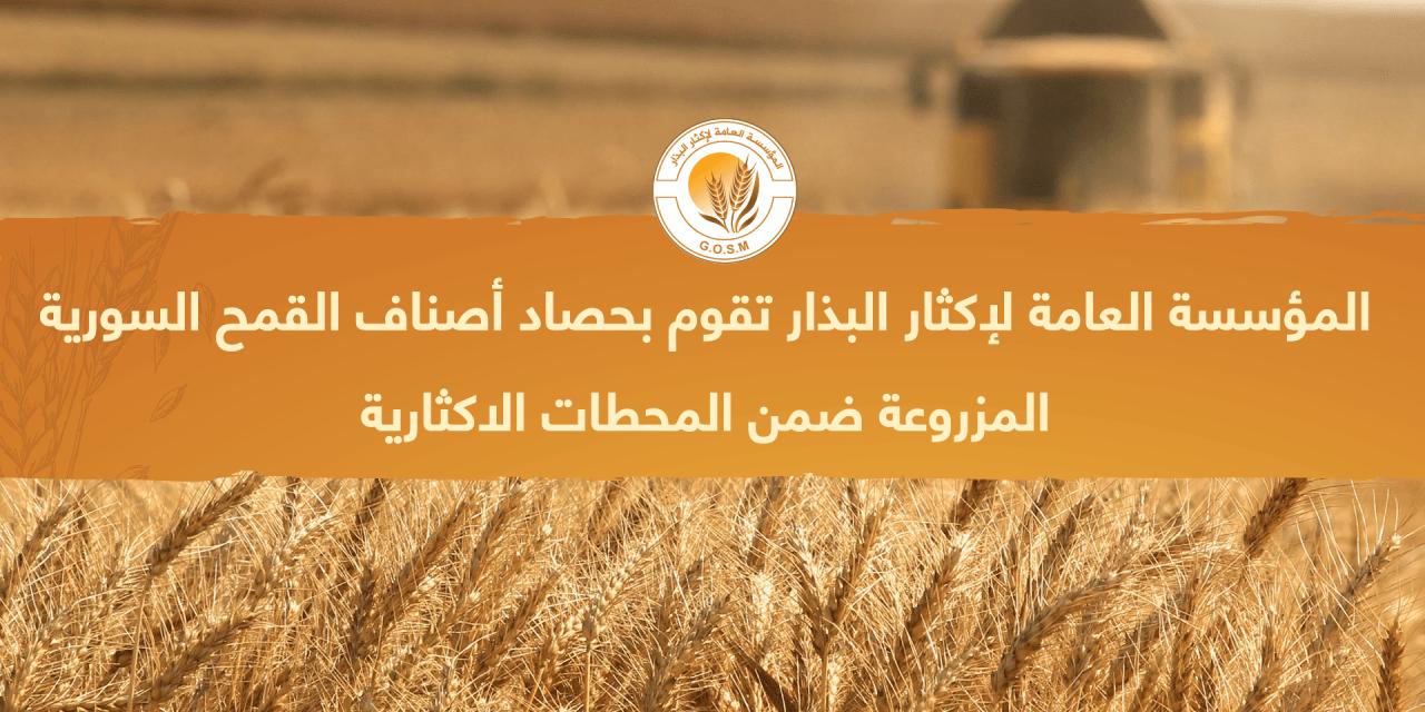 حصاد المحطات الاكثارية التابعة لمؤسسة اكثار البذار