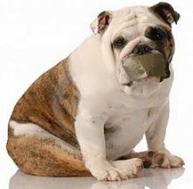 barking-pup