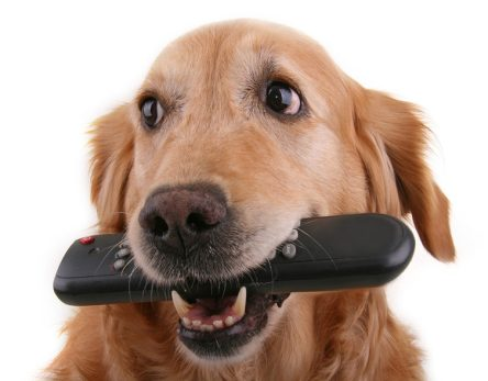 dogs-and-television