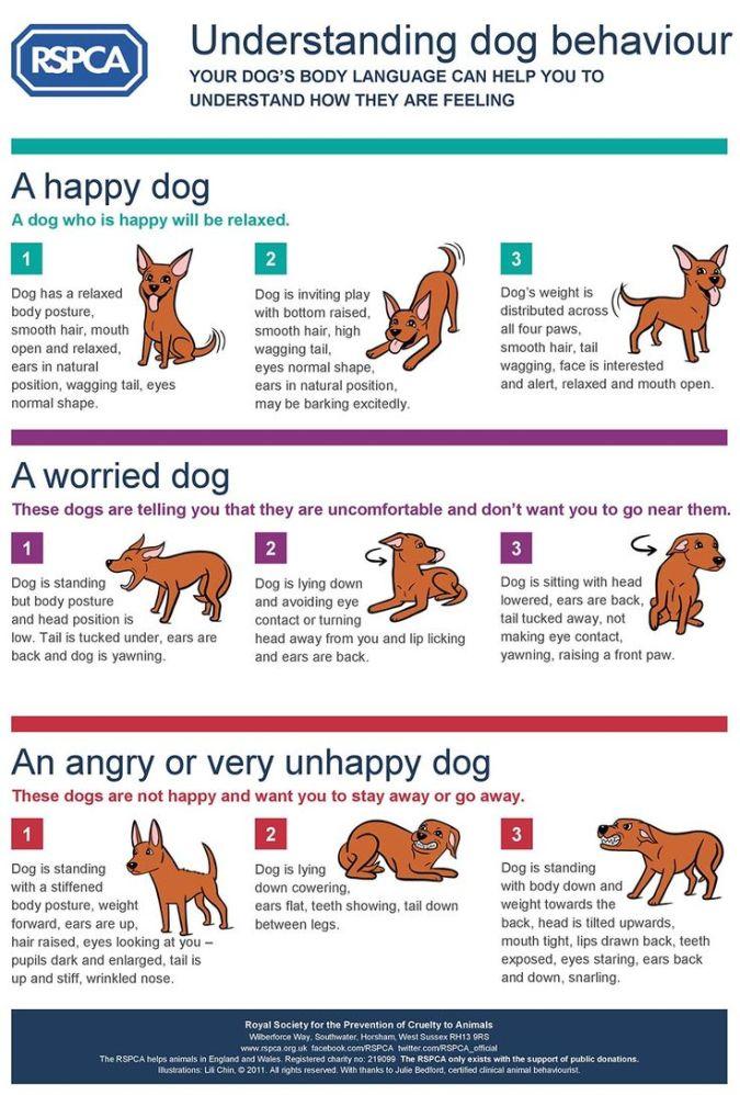 dog-talk