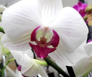 DO's and DON'Ts of caring for orchids