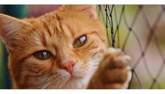 Παγίδευσαν γάτα σε κλουβί και την χτύπησαν με ψαροντούφεκο