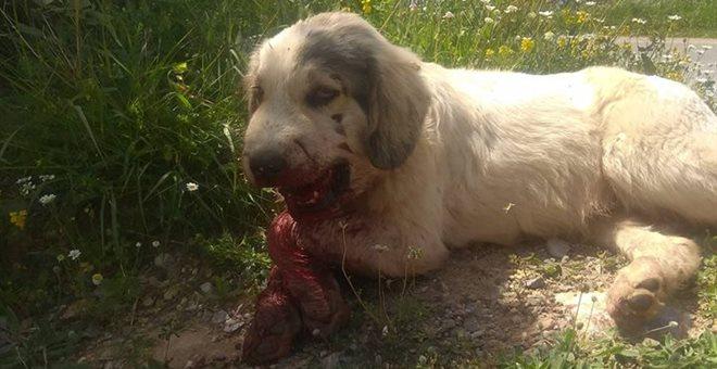 Σοκαριστική κακοποίηση σκύλου στην Καλαμάτα