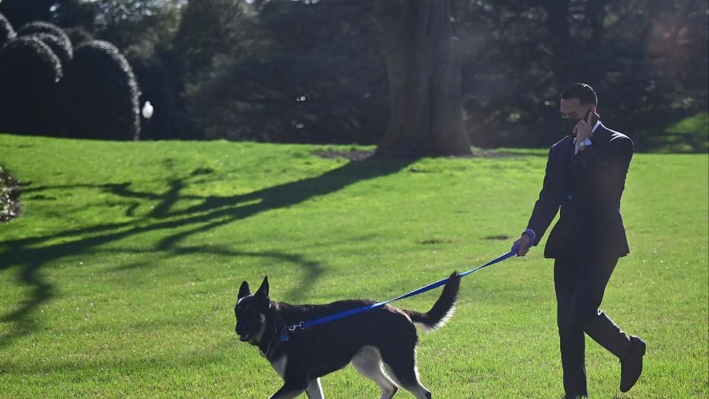 President Biden's Dog Major Walking White House Lawn Again After Return