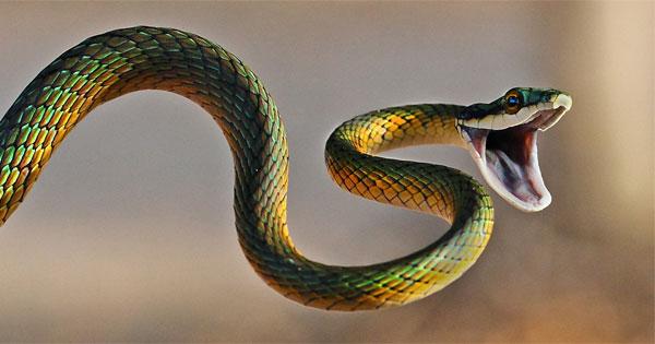 spirit animal snake
