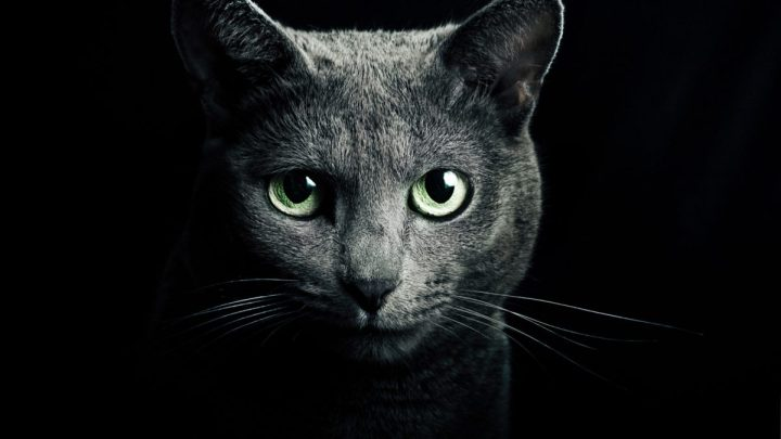 CAT – Protects You And Your Home From Ghosts And Negative Spirits!
