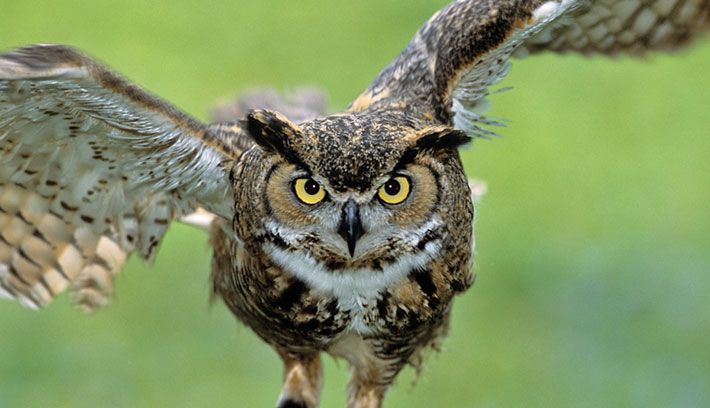 owl-15-common-animal-messengers-and-their-meaning