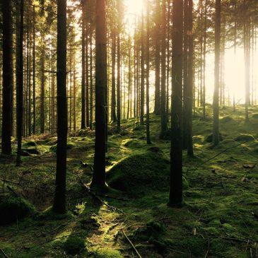 為何你需要森林探險?森林療癒的研究成果