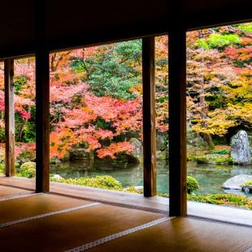 京都紅楓,深藏巷弄的洛北蓮華寺
