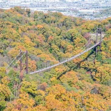 大阪府民之森,漫步於森林之上的星之鞦韆