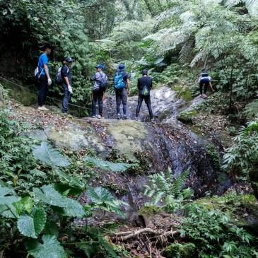 台灣小百岳|關西石牛山,絕無冷場的森林探險!