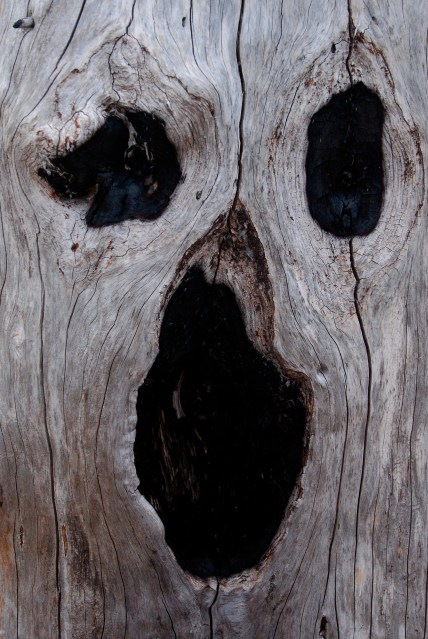 So many ghostly faces in the trees!