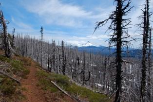 PCT Ridge Trail