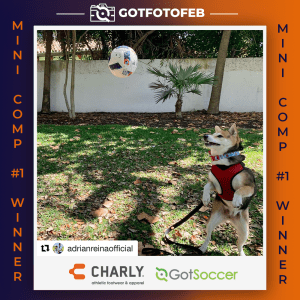 GotFotoFeb Mini Comp Winners_Dog
