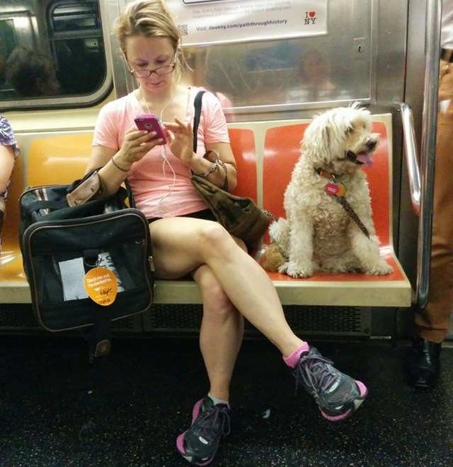 https://i1.wp.com/gothamist.com/attachments/arts_jen/neworigladydogsubway14.jpg