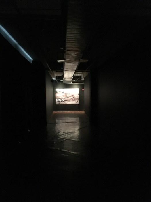 Art in General Coyotaje Exhibit