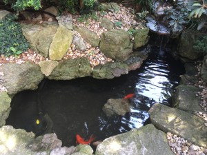 Koi pond, Louis Armstrong House