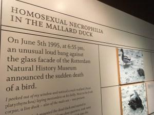 Museum of Sex, New York