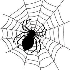 【蜘蛛写真あり閲覧注意】ジョロウグモ♀のレアショット&観察記