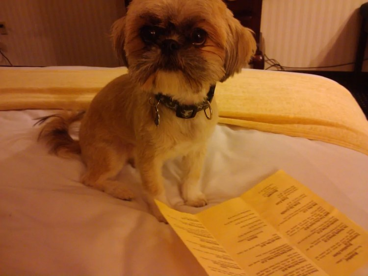 Lucy checking out room service in Memphis