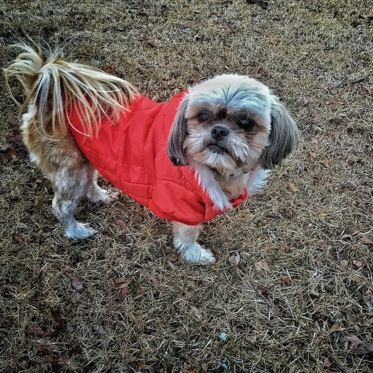 My dog Lucy on a trip to Oklahoma in January