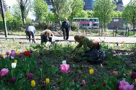 guerilla-gardening-glasgow