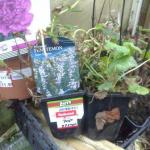 cheap perennials