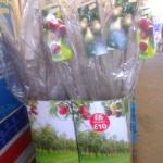 tesco apple trees