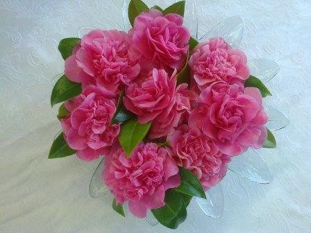 pink camelia blooms arranged in water in bowl