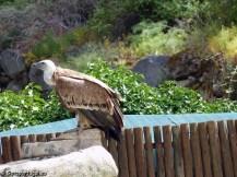 Parque Natural do Douro Internacional (4)