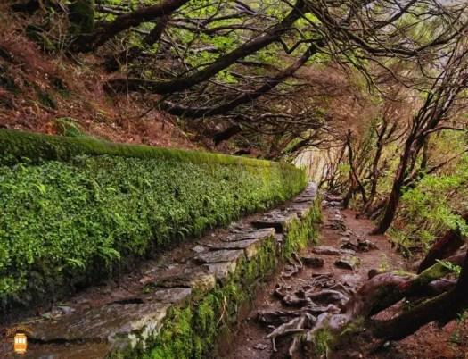 Levada das 25 Fontes e do Risco - Madeira 15