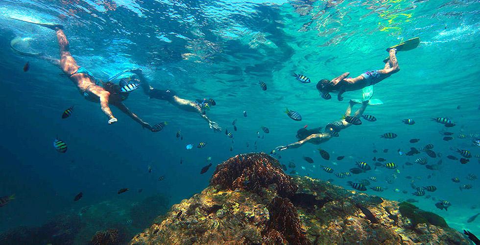 Snorkeling in Koh Phi Phi