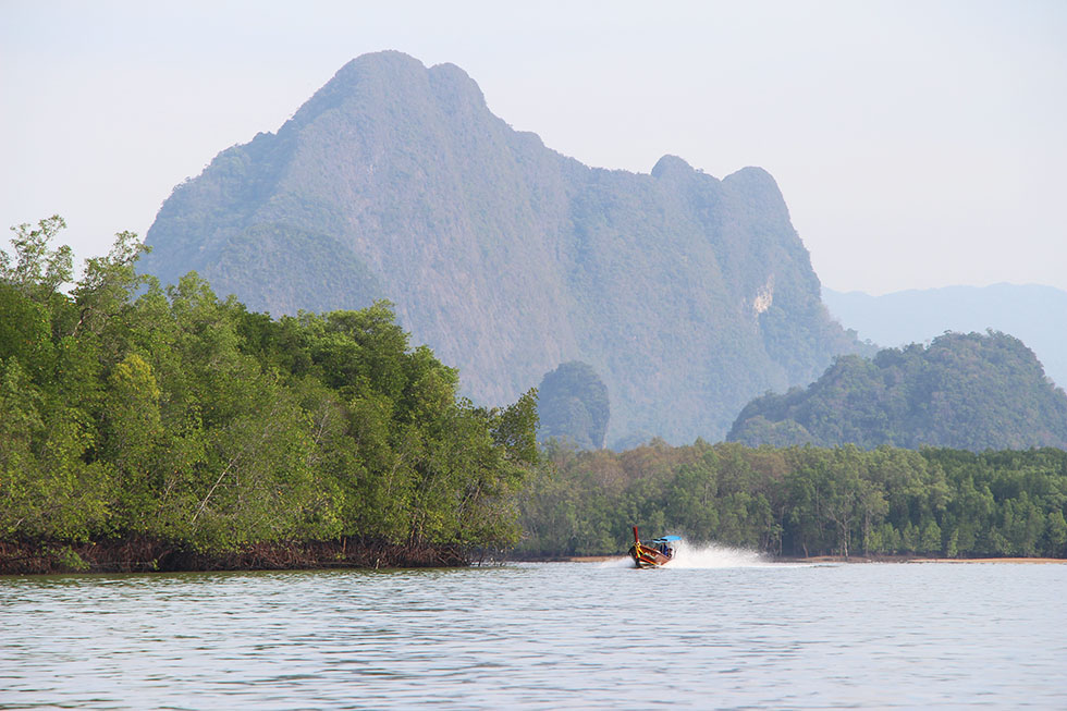 Longtail-boat around Phang Nga's mangrove forest