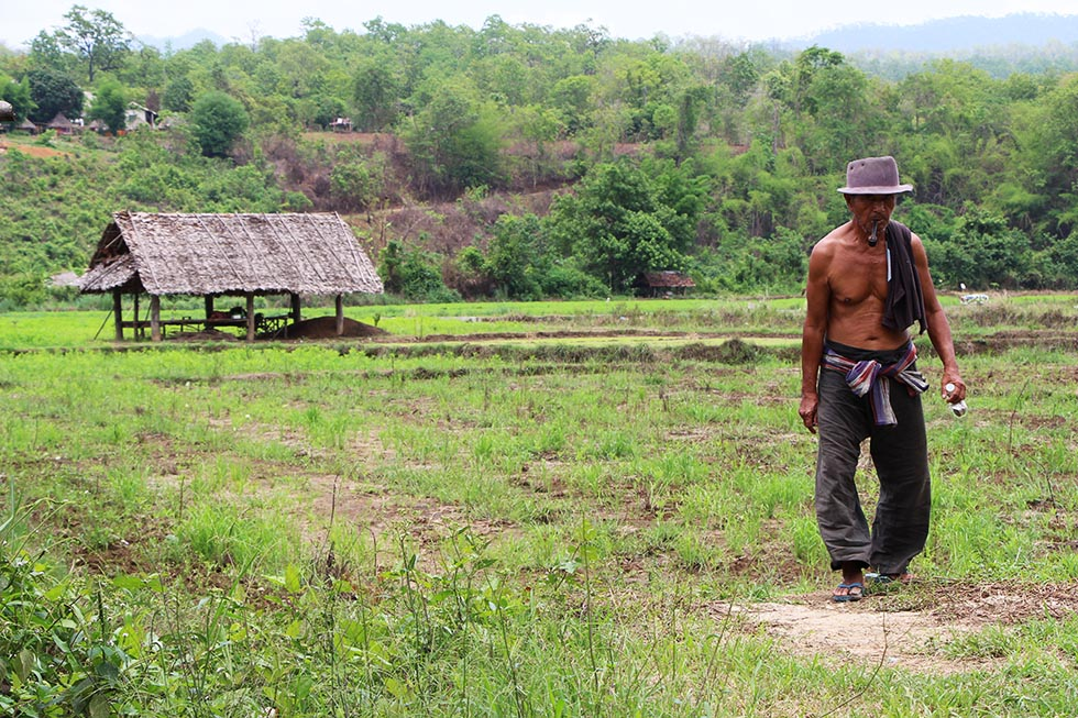 A local working working the paddy field in Mae Hong Son