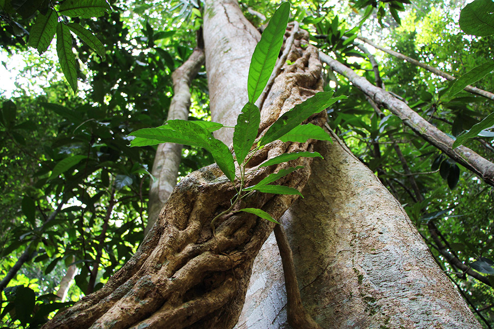 Nature at its best - Khao Ngon Nak Trail in Krabi