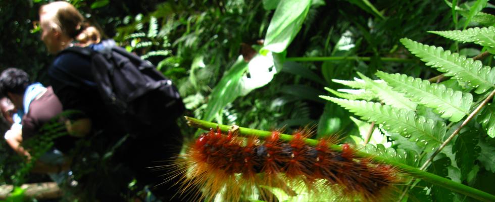 Many bugs call Khao Yai National Park their home