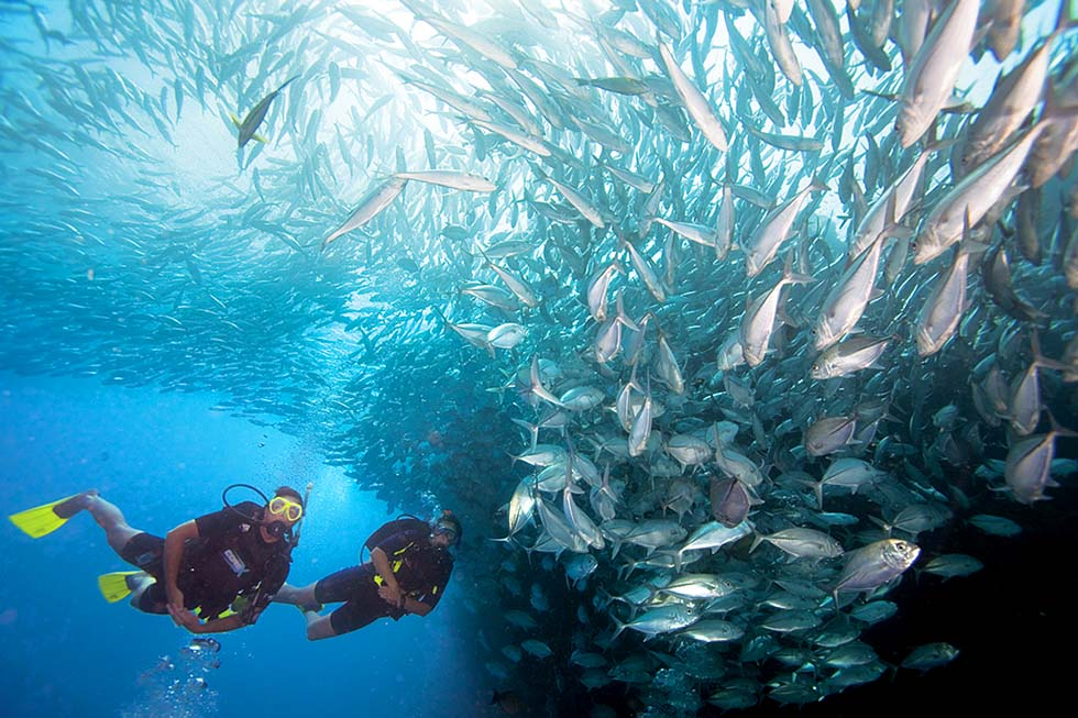 Diving near Pattaya
