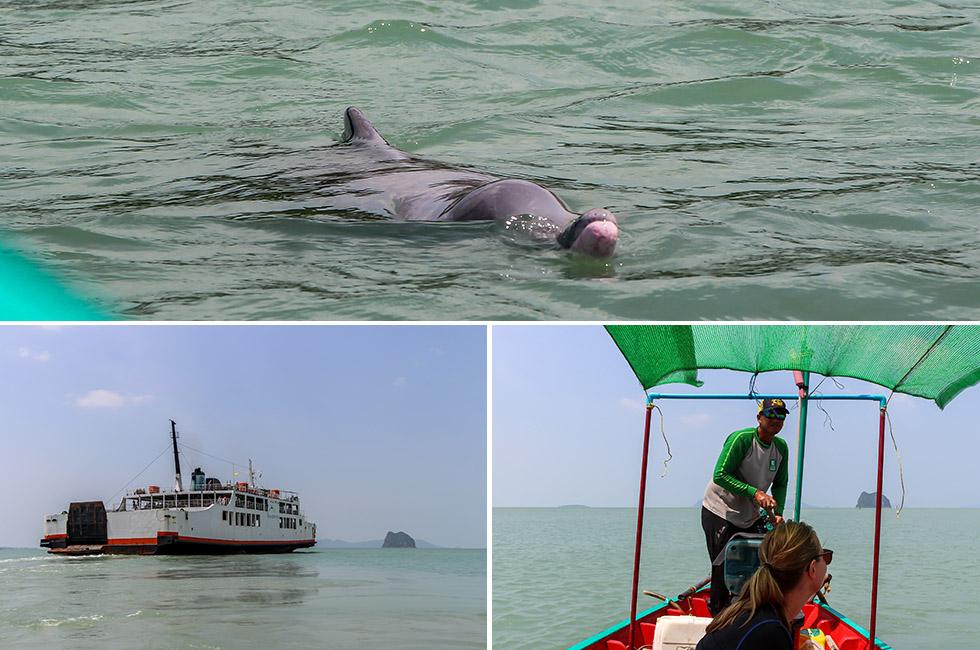 Dolphin boat tour Khanom