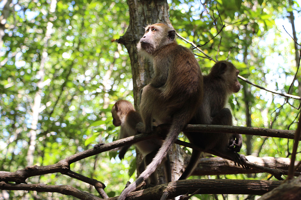 Curious monkeys were on the lookout - Tha Lane Bay in Krabi