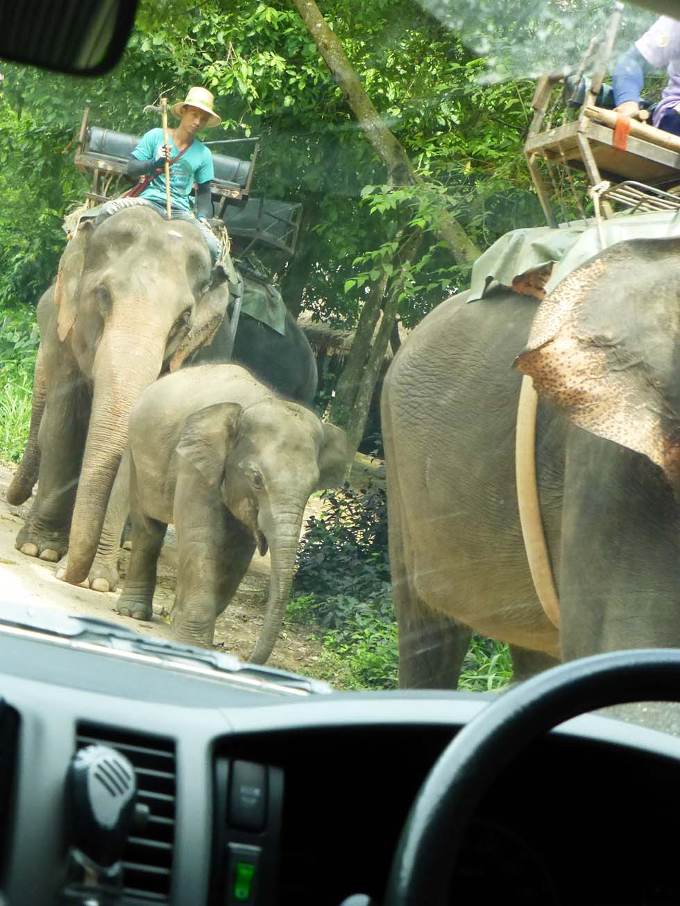 Trekking with baby elephant