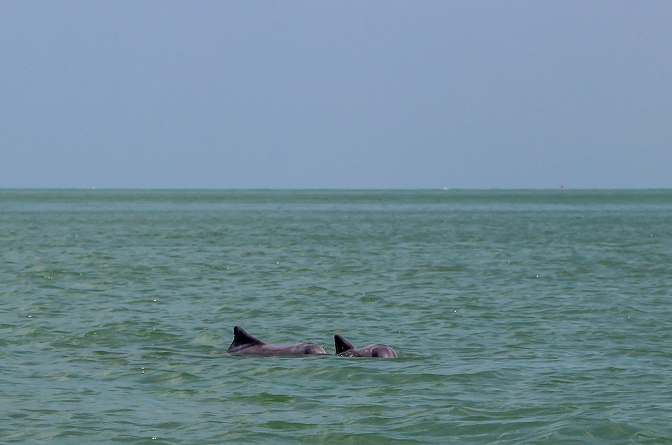 Mother and a baby dolphin