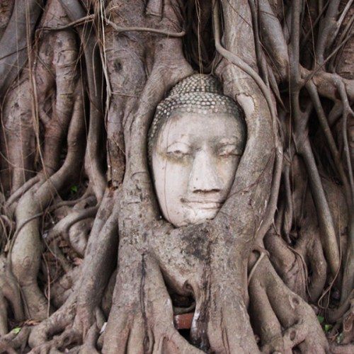 Buddha's Head in Tree Roots at Wat Phra Mahathat in Ayutthaya