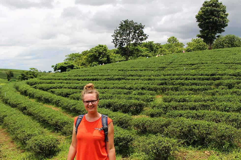 Choui Fong Tea Plantation in Chiang Rai