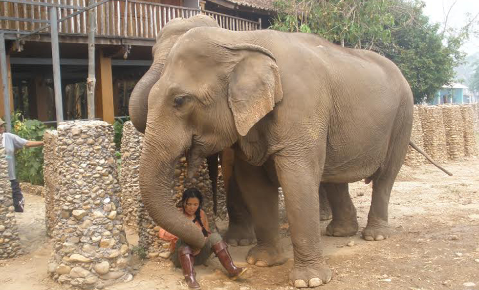 Lek, the founder of Elephant Nature Park
