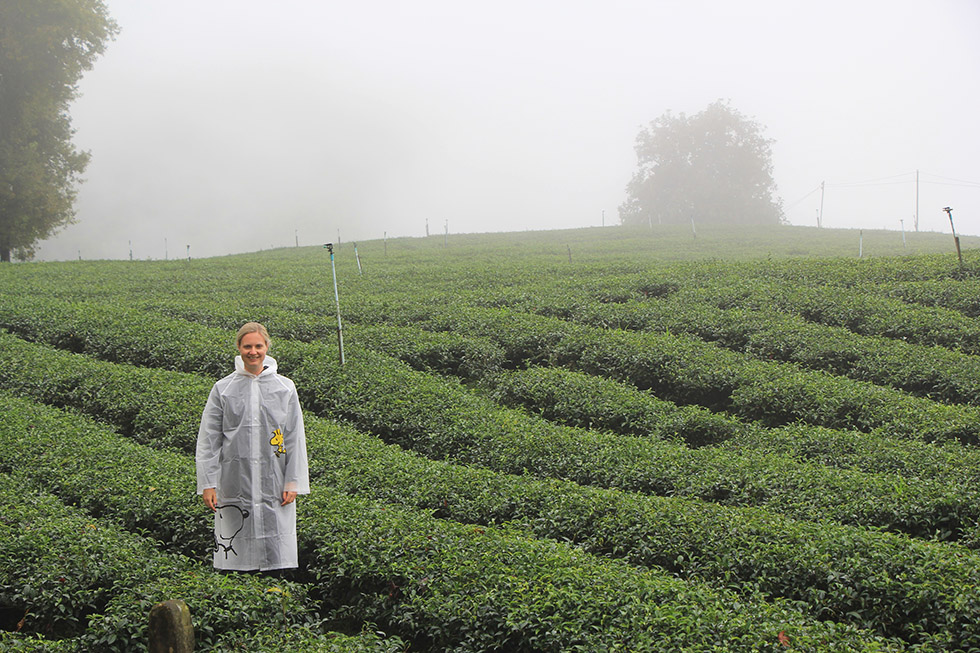 A wet visit to the tea plantations of Mae Salong