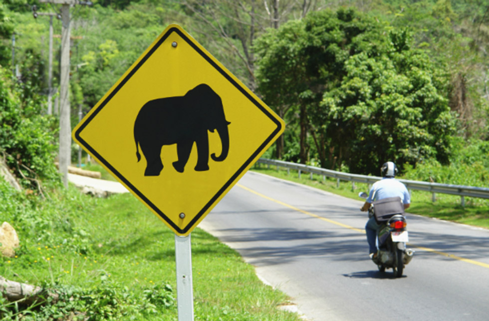 Watch out for elephants on the road!